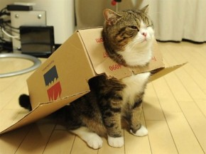 Super-Box-Cat